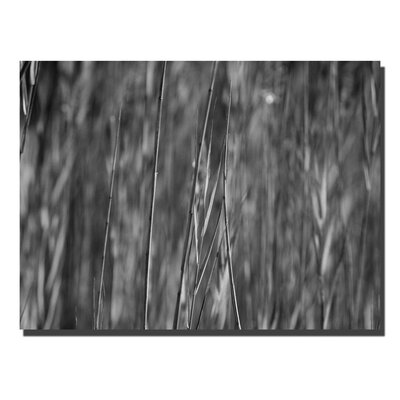 "Trademark Global Reed Abstract by Kurt Shaffer, Canvas Art - 35"" x 47"""