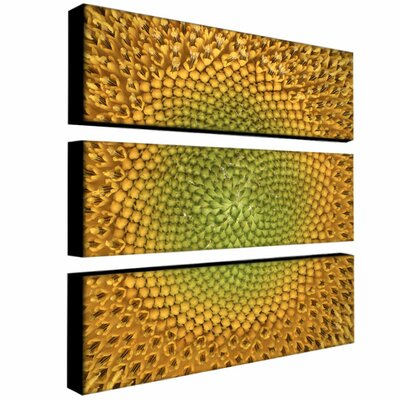 Trademark Global Sunflower by Aiana Canvas Art (Set of 3)