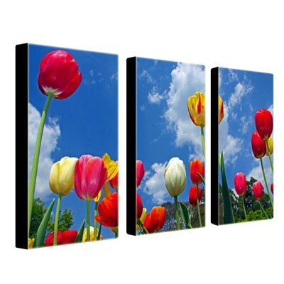 Trademark Global Heaven by Cat Eyes Canvas Art (Set of 3)