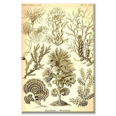 Buyenlarge Seaweed Canvas Wall Art