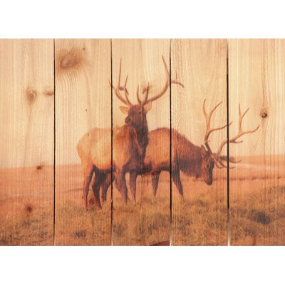 Bull Elk Wall Art