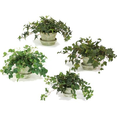 Distinctive Designs Silk Ivy and Vine Arrangements in Clay Pot (Set of 4)