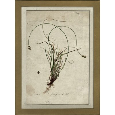 Botanical I Wall Art