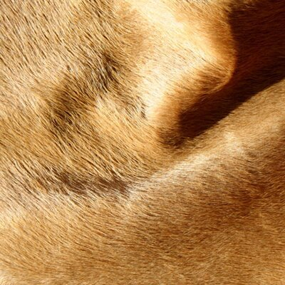 Pure Rugs Natural Cowhide Camel Rug