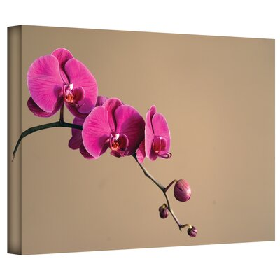 Art Wall Elena Ray 'Magenta Orchid' Gallery-Wrapped Canvas Wall Art
