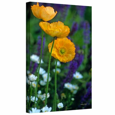 Art Wall Kathy Yates 'La Playa Poppies' Gallery-Wrapped Canvas Wall Art