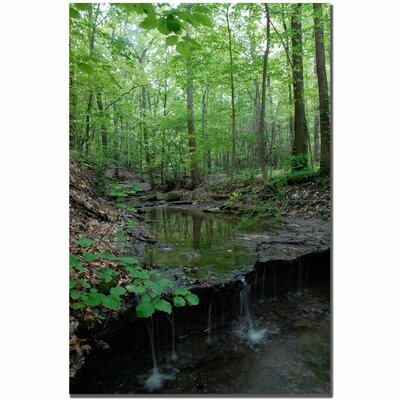 Trademark Art Tiny Forest Falls by Kurt Shaffer, Canvas Art - 24