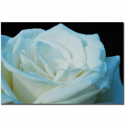 "Trademark Fine Art White Rose by Kurt Shaffer, Canvas Art - 16"" x 24"""