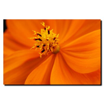 Trademark Art Orange Flower by Kurt Shaffer, Canvas Art - 18