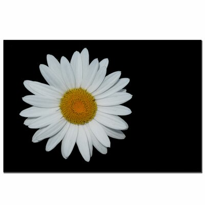 Trademark Art Daisy on Black by Kurt Shaffer, Canvas Art - 16