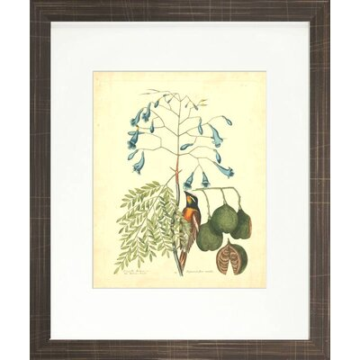 Floral Living Catesby Bird and Botanical II Framed Wall Art
