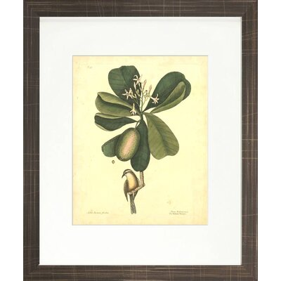 Floral Living Catesby Bird and Botanical III Framed Wall Art