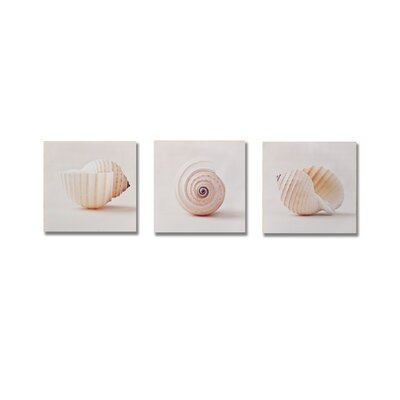 "Graham & Brown Shell Trio  Box Art - 8"" X 24"" (Set of 3)"