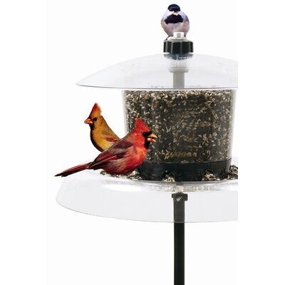 Droll Yankees Jagunda Squirrel-Proof Bird Feeder with Auger