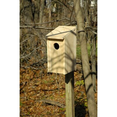 Heartwood Screech Owl Bird House