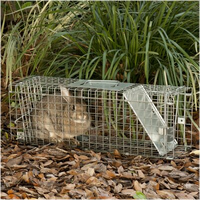Havahart Medium Collapsible 1-Door Live Animal Trap