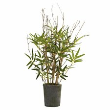 Bamboo Tree with Cement Pot