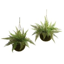 Leather Fern with Mossy Hanging Basket (Set of 2)