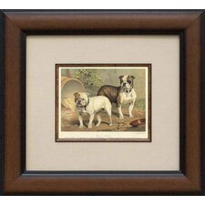 English Bulldogs Framed Print