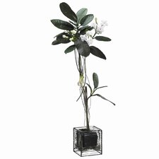 "25"" Stephanotis Topiary with Hurricane Glass Vase"