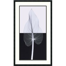 "Calla Leaf II by Steven N. Meyers, Framed Print Art - 29.08"" x 17.14"""