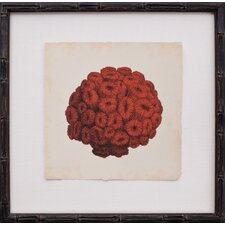 Mini Red Coral I Art