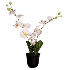 "Floral 24"" Artificial Potted Cymbidium Orchids in White and Yellow"