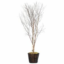 Deluxe 6' Artificial Potted Natural Winter Birch Tree in White and Brown