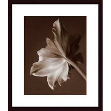 Moonglow Tulip Wood Framed Art Print