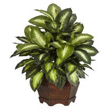 Golden Dieffenbachia Plant in Green