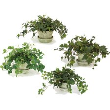 Silk Ivy and Vine Arrangements in Clay Pot (Set of 4)