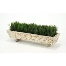 Plastic Grass in Planter