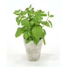 Silk Basil Spray in Clay Pot