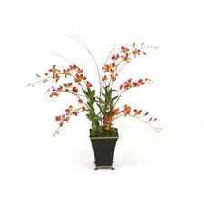 Silk Rust Dendrobium Orchid Plants in Square Toleware Planter