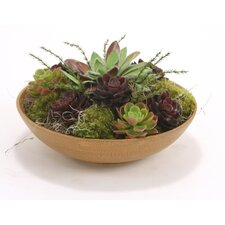 Mixed Faux Succulents in an Wood Bowl