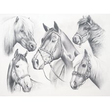 Sketching Pencil By Numbers Advanced Horse Montage Sketching Pencil