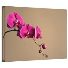 Elena Ray 'Magenta Orchid' Gallery-Wrapped Canvas Wall Art