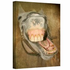 David Liam Kyle 'Laughing Horse' Gallery-Wrapped Canvas Wall Art