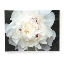 "Perfect Peony by Kurt Shaffer, Canvas Art - 18"" x 24"""