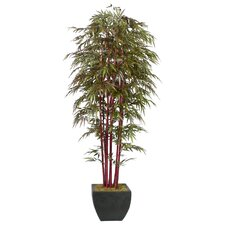 Realistic Bamboo Tree in Medium Decorative Planter