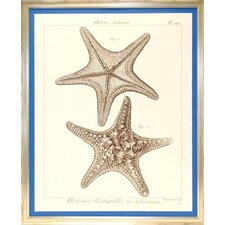 Seaside Living Striking Starfish II Framed Wall Art