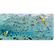 'Blacktip Sharks and Tropical Fish in Bora-Bora Lagoon' by Michele Westmorland Stretched Canvas Art