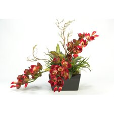 Cymbidium Orchids in Rectangle Planter