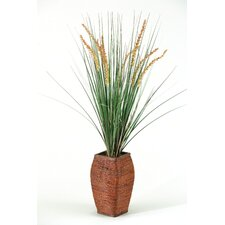 Onion Grass with Dogstail in Rattan Planter
