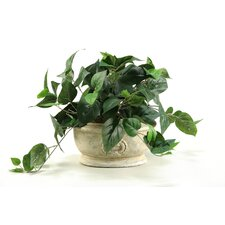 Philo Ivy in Oblong Ceramic Planter