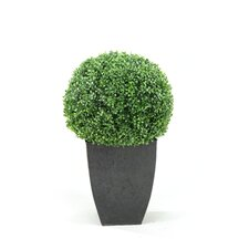 Boxwood Ball Topiary in Square Planter