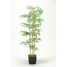 Mini Bamboo Tree in Square Metal Planter
