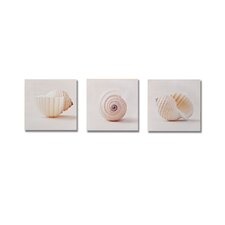 "Shell Trio  Box Art - 8"" X 24"" (Set of 3)"