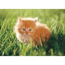 Orange Kitten Cardboard Jigsaw Puzzle