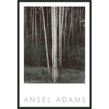 "Aspens Framed Print by Ansel Adams - 36"" x 24"""